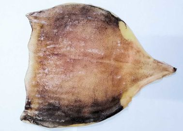 Fresh Semi Dried Squid / Seasoned Squid Body 45% - 55%  Moisture